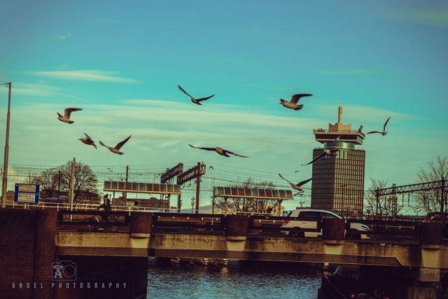 Amsterdam, Vintage building, Street Photography, Netherlands, Day tour in Amsterdam, birds flying