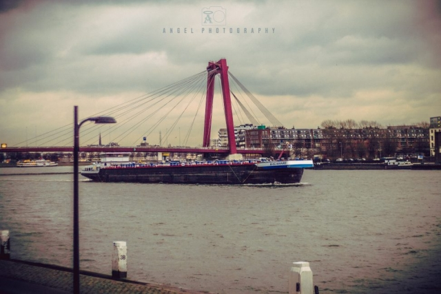 Rotterdam, Cityscape, Winter Season, Day Tour in Rotterdam, Contemporary City, Bridge