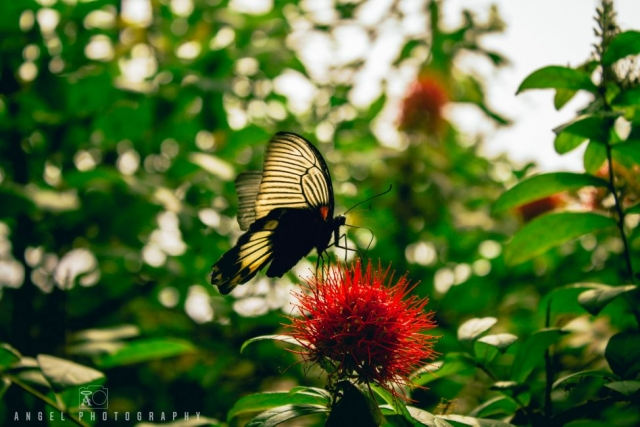 Butterfly, garden, wildlife, Singapore Zoo, Singapore Day tour